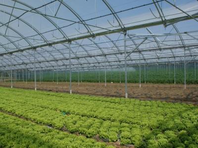 Gartneri og Planteskole