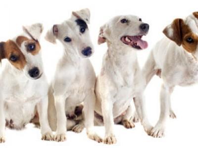 Utstyr for hund