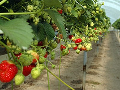 Frukt, Bær og Grønnsaker