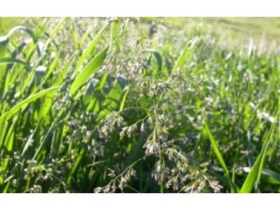 Gras & kløver