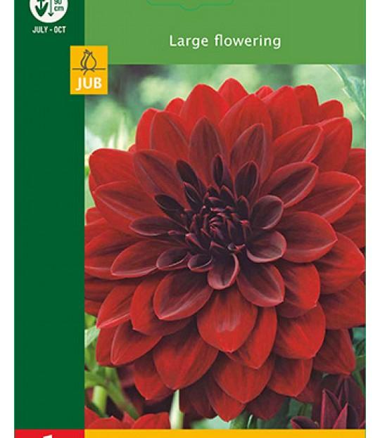 Blomsterknoll Georgine Mørk rød 1 stk