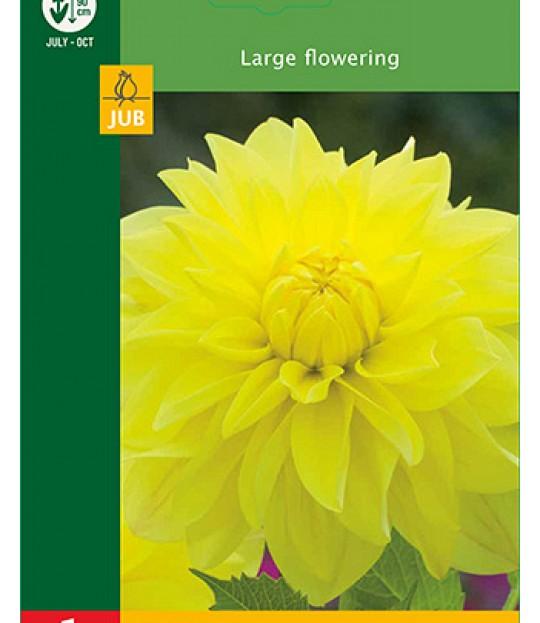 Blomsterknoll Georgine Gul 1 stk