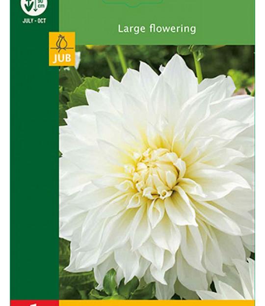 Blomsterknoll Georgine Hvit 1 stk