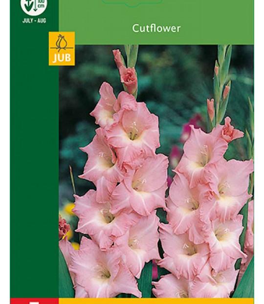 Blomsterknoll Gladioler Rosa 5 stk