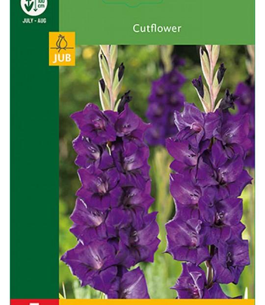 Blomsterknoll Gladioler Lilla 5 stk