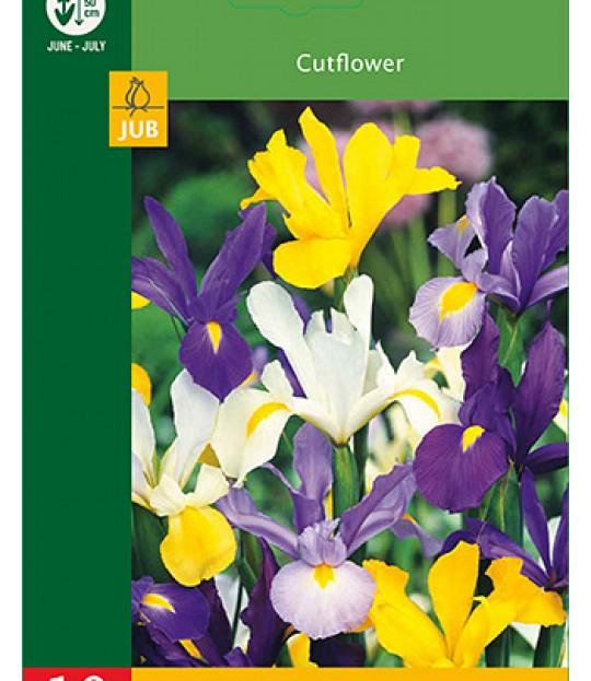 Blomsterløk Iris Hollandica Mix 10 stk