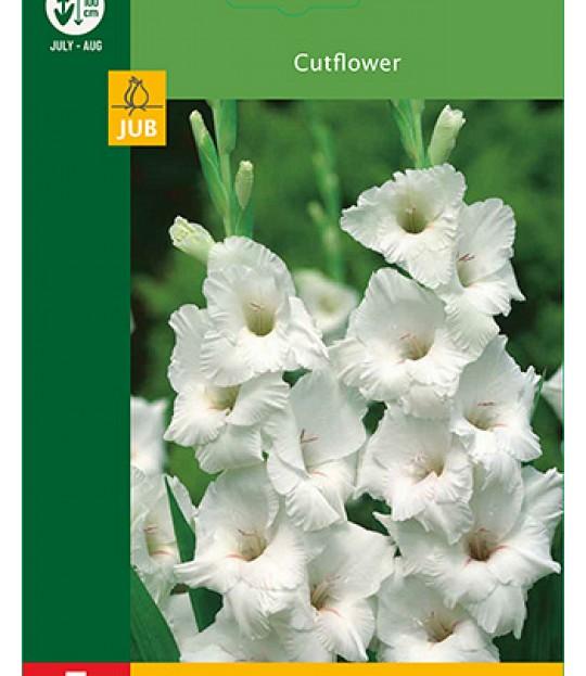 Blomsterknoll Gladioler Hvit 5 stk